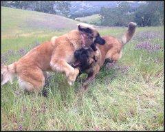 Sable and Rufus